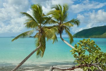 Maho Bay Beach, St John palms